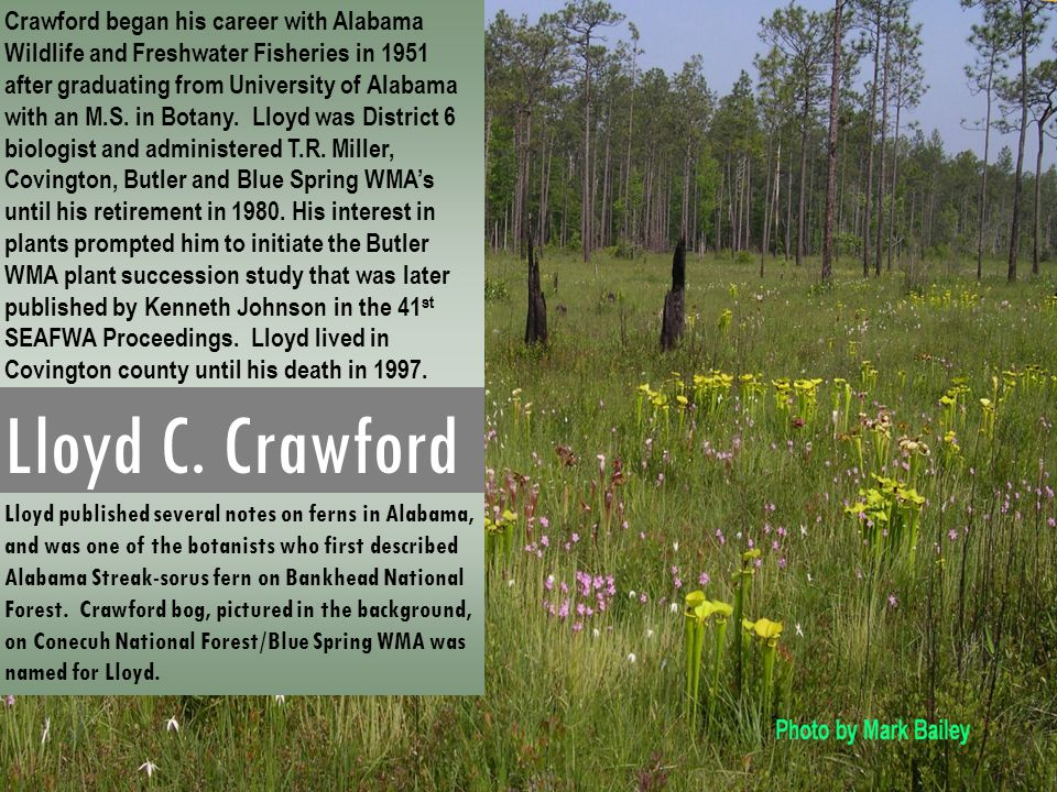 Lloyd C. Crawford Lloyd published several notes on ferns in Alabama, and was one of the botanists who first described Alabama Streak-sorus fern on Ban