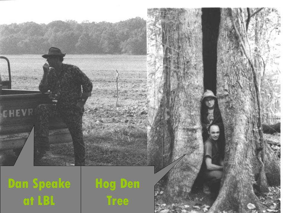 Dan Speake at LBL Hog Den Tree