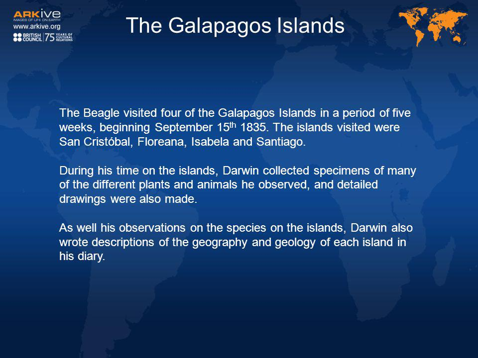 The Beagle visited four of the Galapagos Islands in a period of five weeks, beginning September 15 th 1835. The islands visited were San Cristóbal, Fl