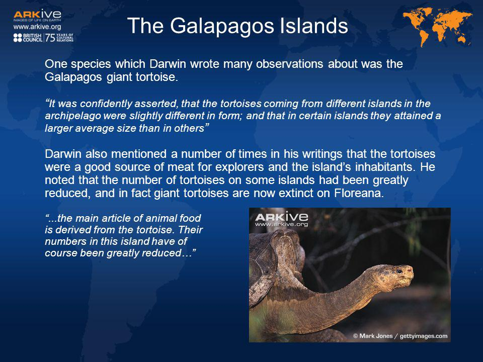 """One species which Darwin wrote many observations about was the Galapagos giant tortoise. """" It was confidently asserted, that the tortoises coming from"""