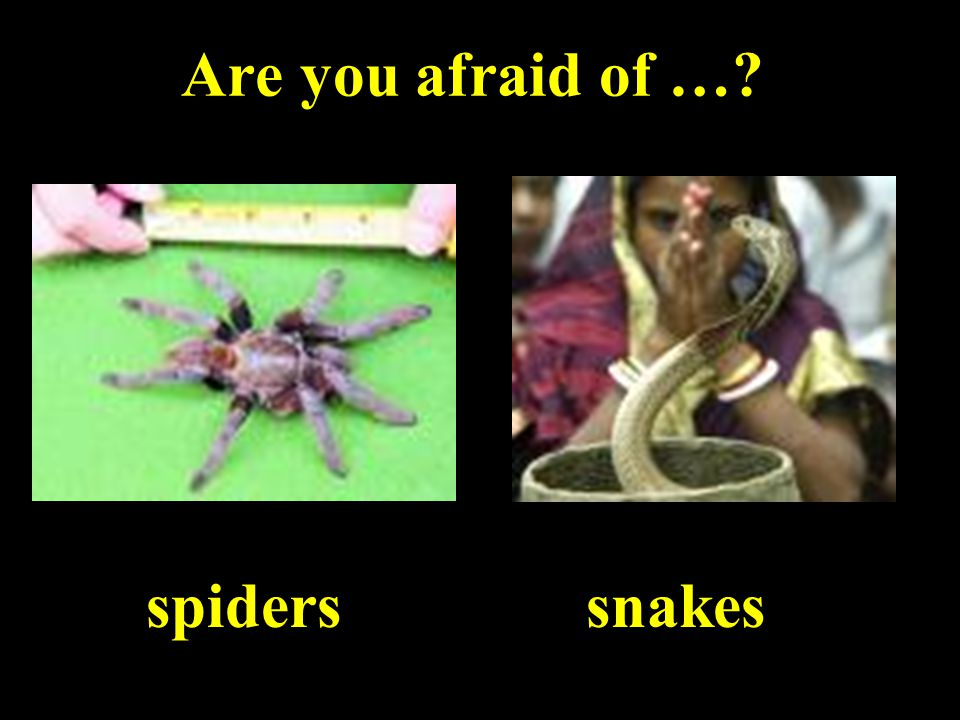 Are you afraid of … spiderssnakes