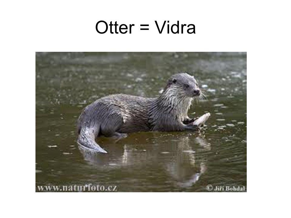 Otter = Vidra