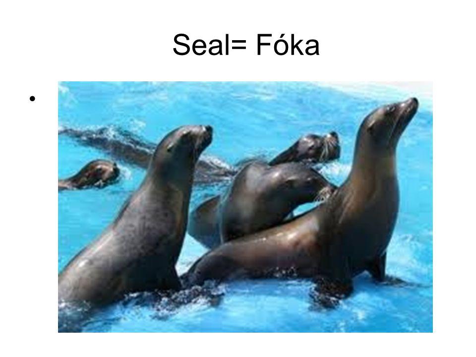 Seal= Fóka