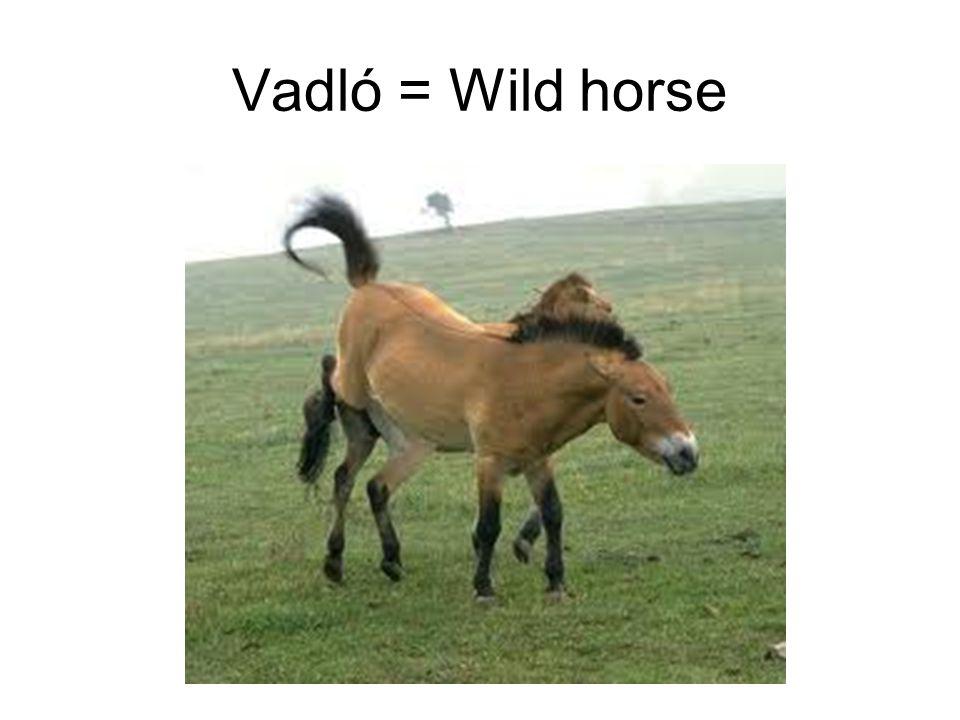 Vadló = Wild horse
