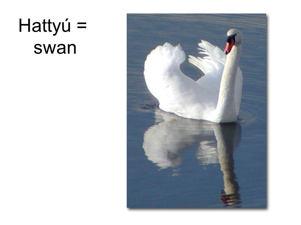 Hattyú = swan