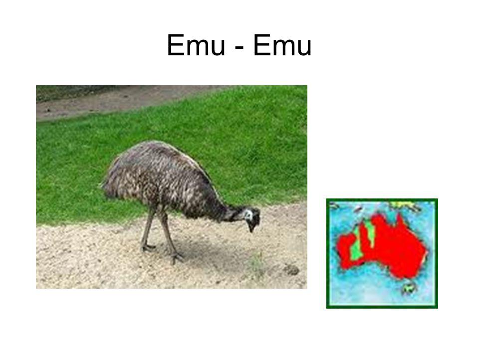 Emu - Emu