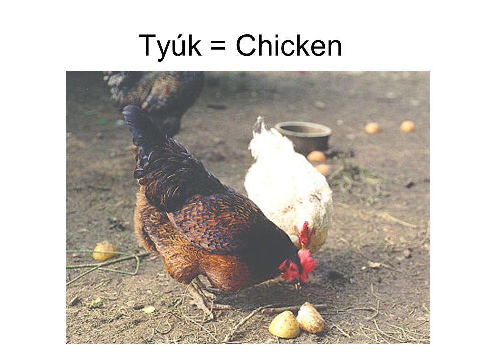 Tyúk = Chicken