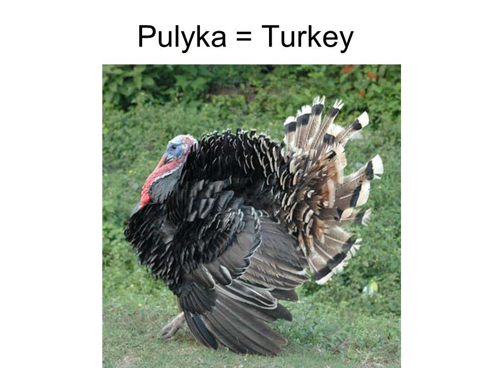 Pulyka = Turkey