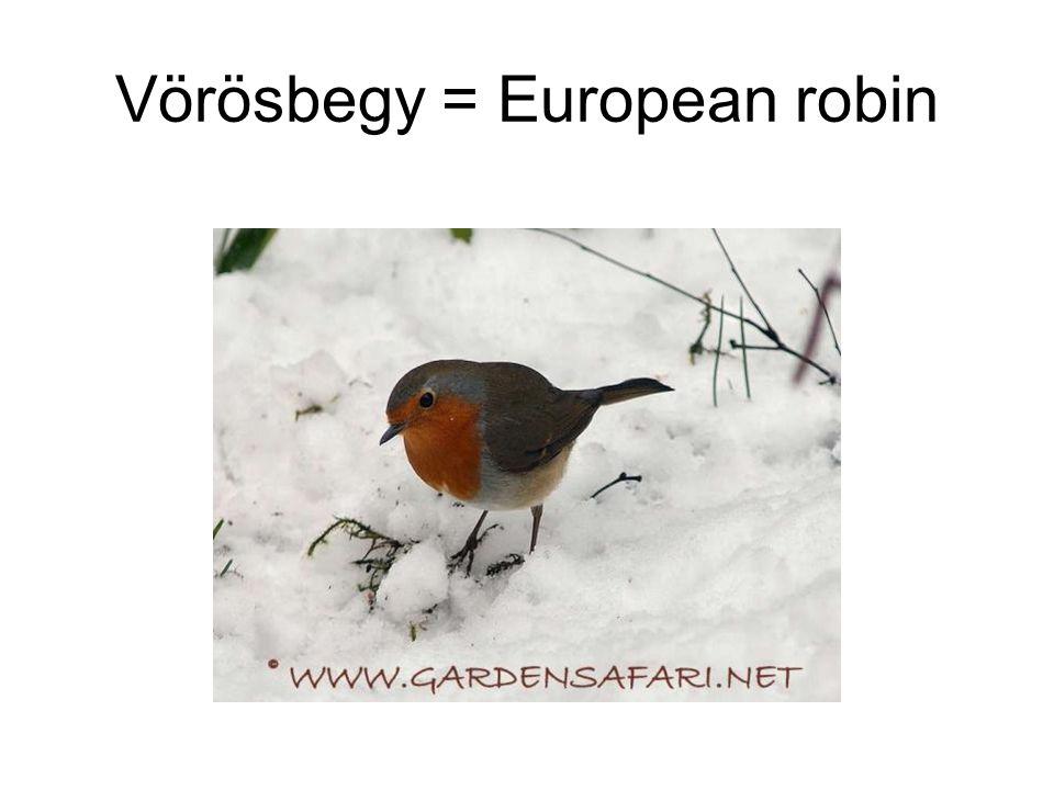 Vörösbegy = European robin