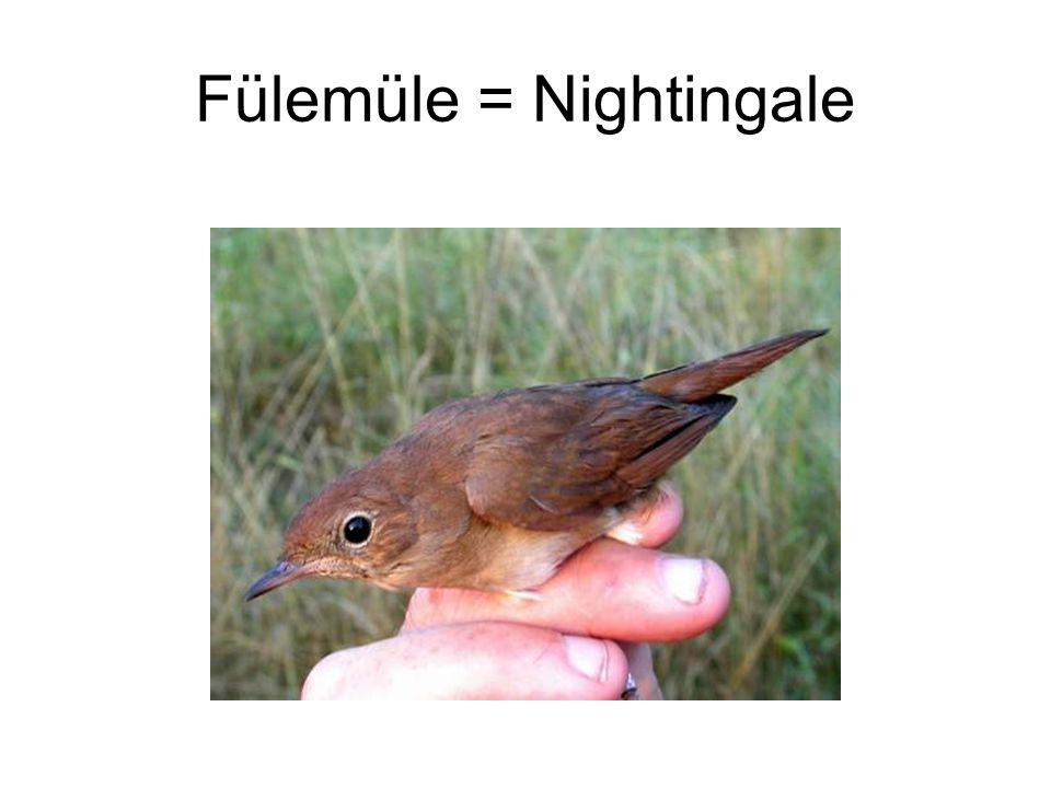 Fülemüle = Nightingale