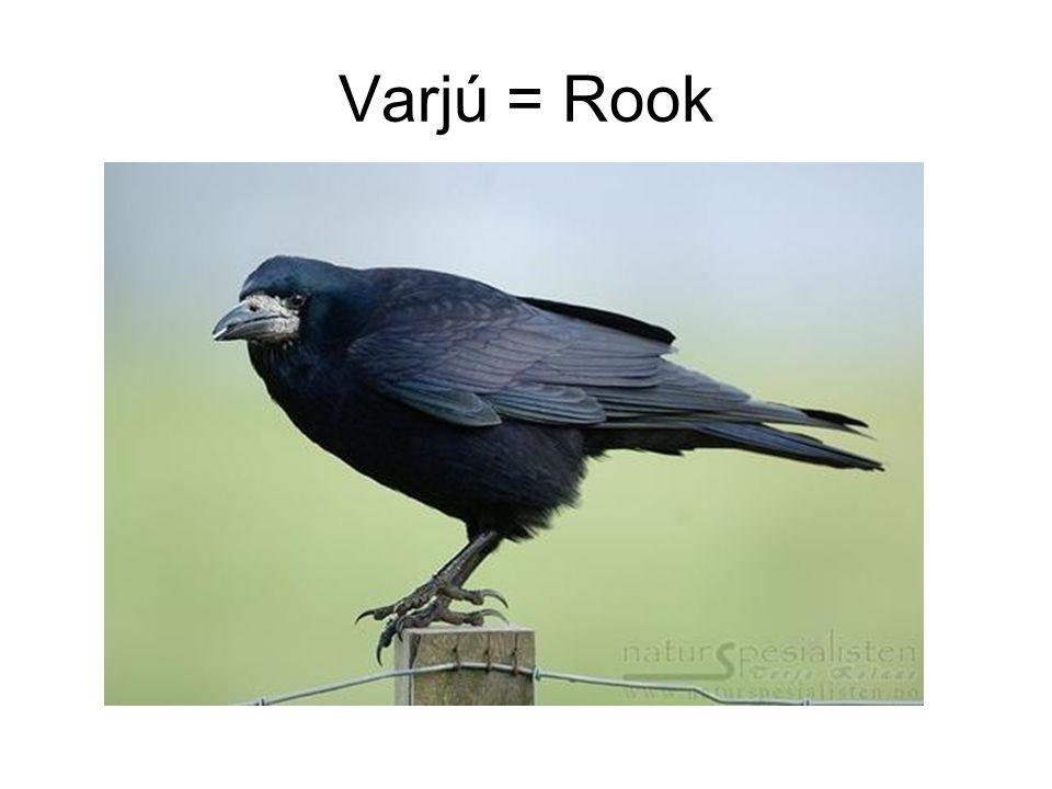 Varjú = Rook