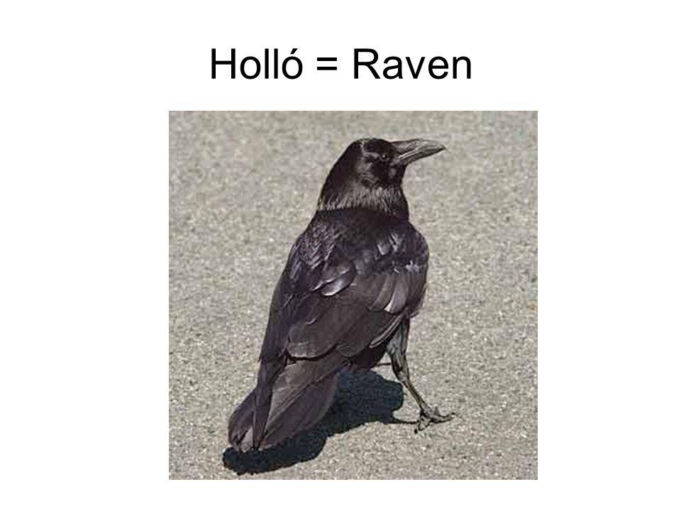Holló = Raven