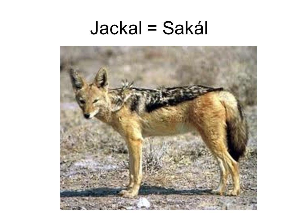 Jackal = Sakál