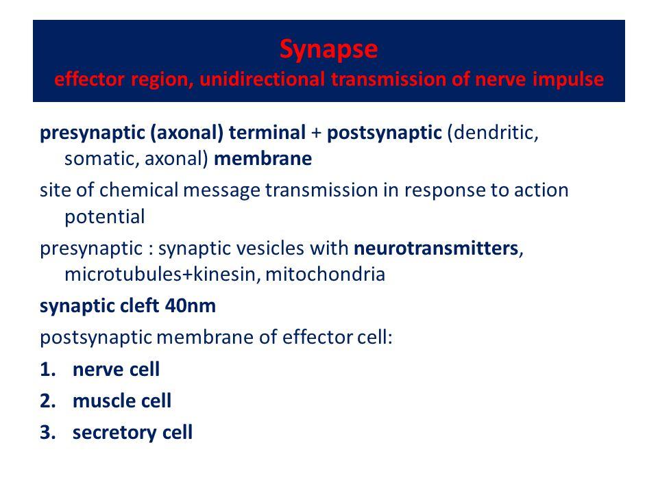 Synapse effector region, unidirectional transmission of nerve impulse presynaptic (axonal) terminal + postsynaptic (dendritic, somatic, axonal) membra