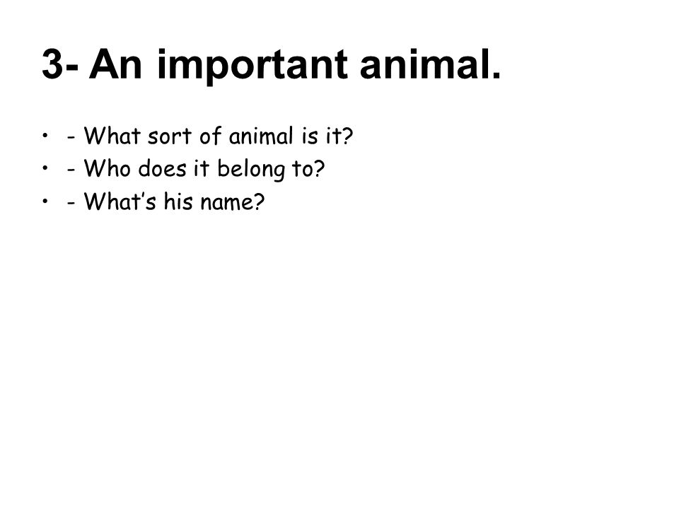 3- An important animal. - What sort of animal is it - Who does it belong to - What's his name