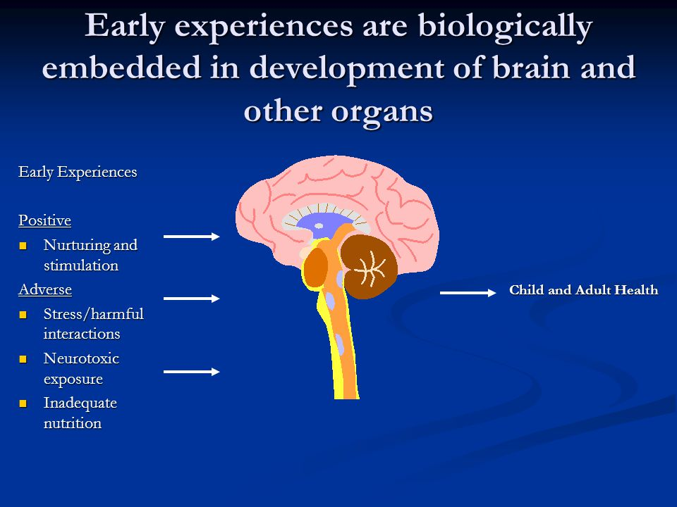 Early experiences are biologically embedded in development of brain and other organs Early Experiences Positive Nurturing and stimulation Nurturing and stimulationAdverse Stress/harmful interactions Stress/harmful interactions Neurotoxic exposure Neurotoxic exposure Inadequate nutrition Inadequate nutrition Child and Adult Health