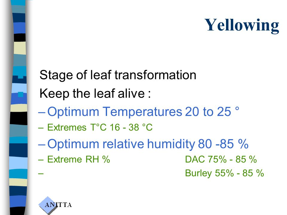 Yellowing n Stage of leaf transformation n Keep the leaf alive : –Optimum Temperatures 20 to 25 ° –Extremes T°C 16 - 38 °C –Optimum relative humidity