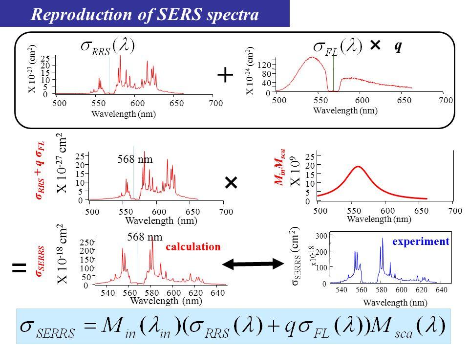 Reproduction of SERS spectra × X 10 -27 cm 2 25 20 15 10 5 0 700650600550500 Wavelength (nm) = 700650600550500 25 20 15 10 5 0 X 10 9 568 nm Wavelength (nm) 250 200 150 100 50 0 640620600580560540 X 10 -18 cm 2 M in M sca σ SERRS σ RRS + q σ FL 568 nm 300 200 100 0 x10 -18 640620600580560 540 experiment calculation Wavelength (nm) σ SERRS (cm 2 ) 25 20 15 10 5 0 X 10 -27 (cm 2 ) 700650600550500 700650600550500 X 10 -24 (cm 2 ) 80 40 0 120 Wavelength (nm) × q +