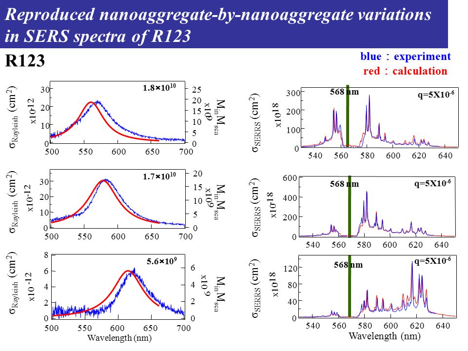 568 nm q=5X10 -6 R123 1.8×10 10 1.7×10 10 5.6×10 9 Reproduced nanoaggregate-by-nanoaggregate variations in SERS spectra of R123 Wavelength (nm) M in M sca σ Rayleish (cm 2 ) σ SERRS (cm 2 ) blue : experiment red : calculation 30 20 10 0 x10 -12 700650600550500 20 15 10 5 0 x10 9 8 6 4 2 0 -12 700650600550500 6 4 2 0 x10 9 300 200 100 0 x10 -18 640620600580560540 600 400 200 0 x10 -18 640620600580560540 120 80 40 0 x10 -18 640620600580560540 30 20 10 0 x10 -12 700650600550500 25 20 15 10 5 0 x10 9 568 nm