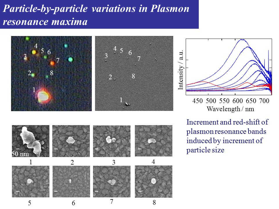 100×120  m Raman shift/cm -1 16001200 800 Normalized Intensity (a.u.) Plasmon resonance Rayleigh scattering image SERRS image SERS spectrum Plasmon resonance spectrum 700650600550500450 Wavelength / nm