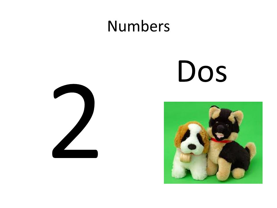 Numbers 2 Dos