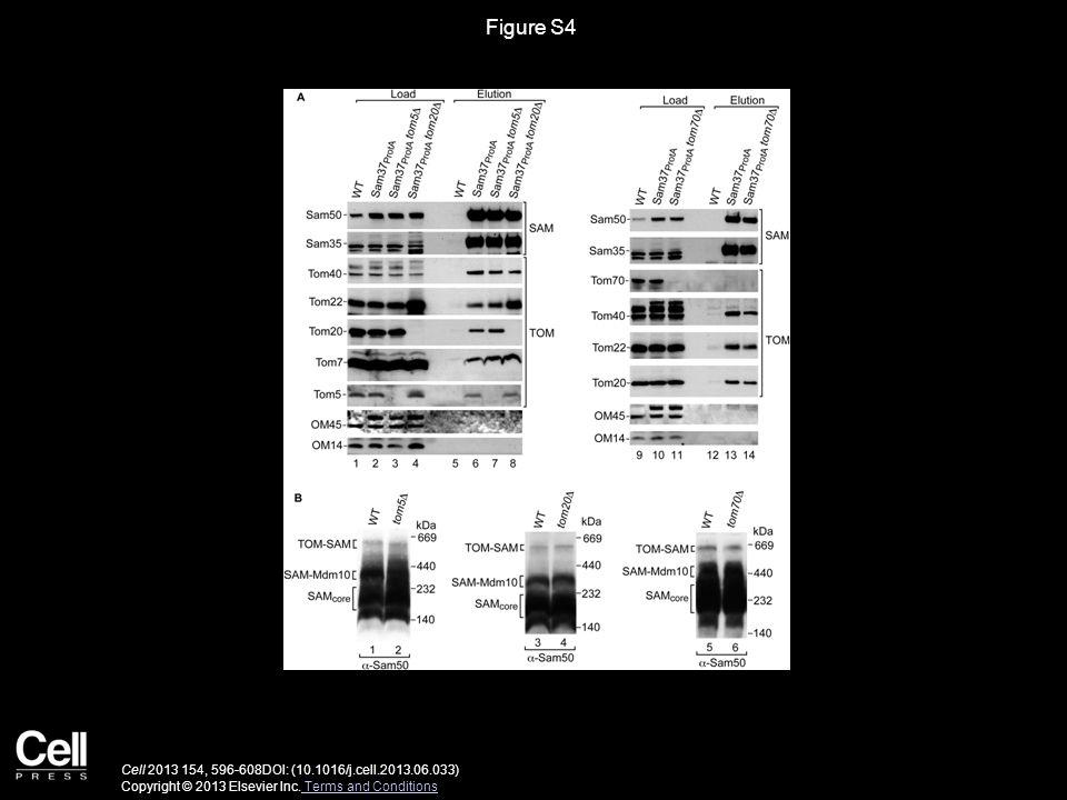 Figure S4 Cell 2013 154, 596-608DOI: (10.1016/j.cell.2013.06.033) Copyright © 2013 Elsevier Inc.