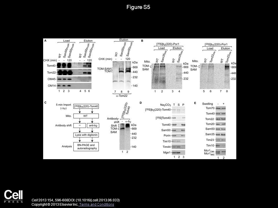 Figure S5 Cell 2013 154, 596-608DOI: (10.1016/j.cell.2013.06.033) Copyright © 2013 Elsevier Inc.