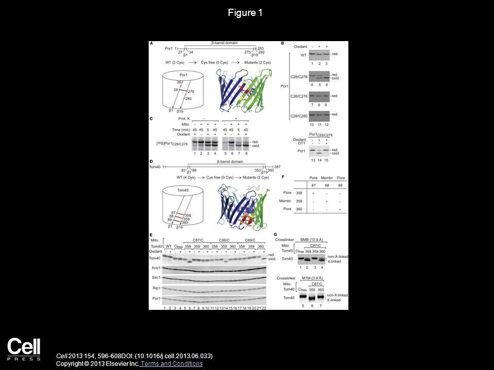 Figure 1 Cell 2013 154, 596-608DOI: (10.1016/j.cell.2013.06.033) Copyright © 2013 Elsevier Inc.