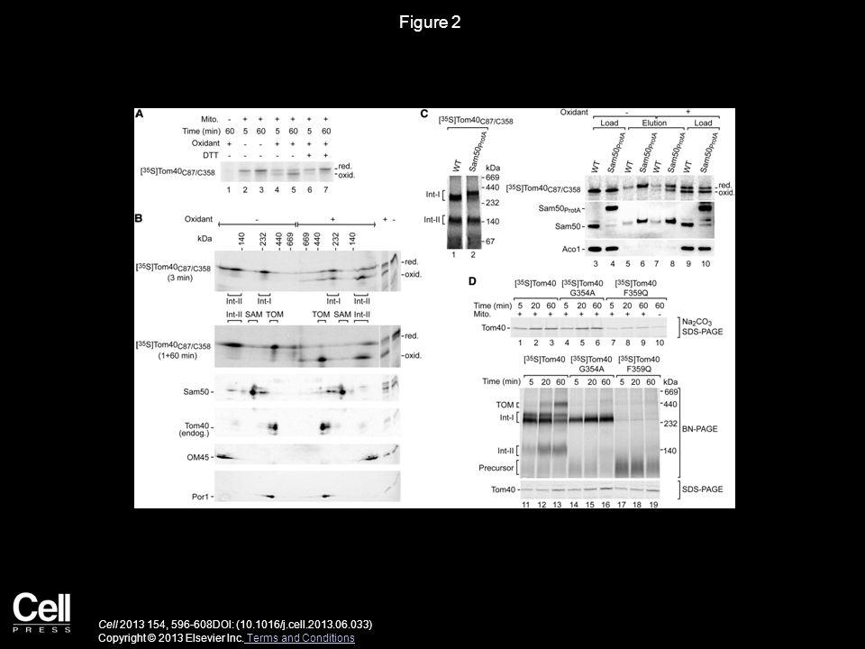 Figure 2 Cell 2013 154, 596-608DOI: (10.1016/j.cell.2013.06.033) Copyright © 2013 Elsevier Inc.