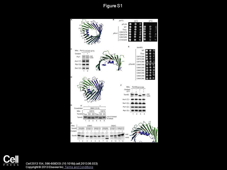 Figure S1 Cell 2013 154, 596-608DOI: (10.1016/j.cell.2013.06.033) Copyright © 2013 Elsevier Inc.