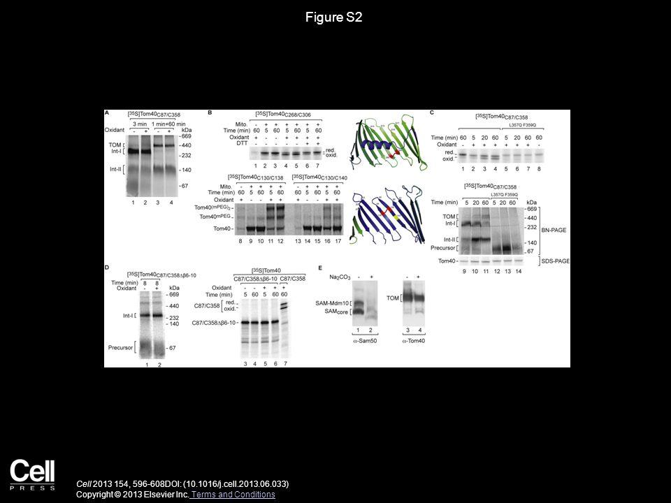 Figure S2 Cell 2013 154, 596-608DOI: (10.1016/j.cell.2013.06.033) Copyright © 2013 Elsevier Inc.