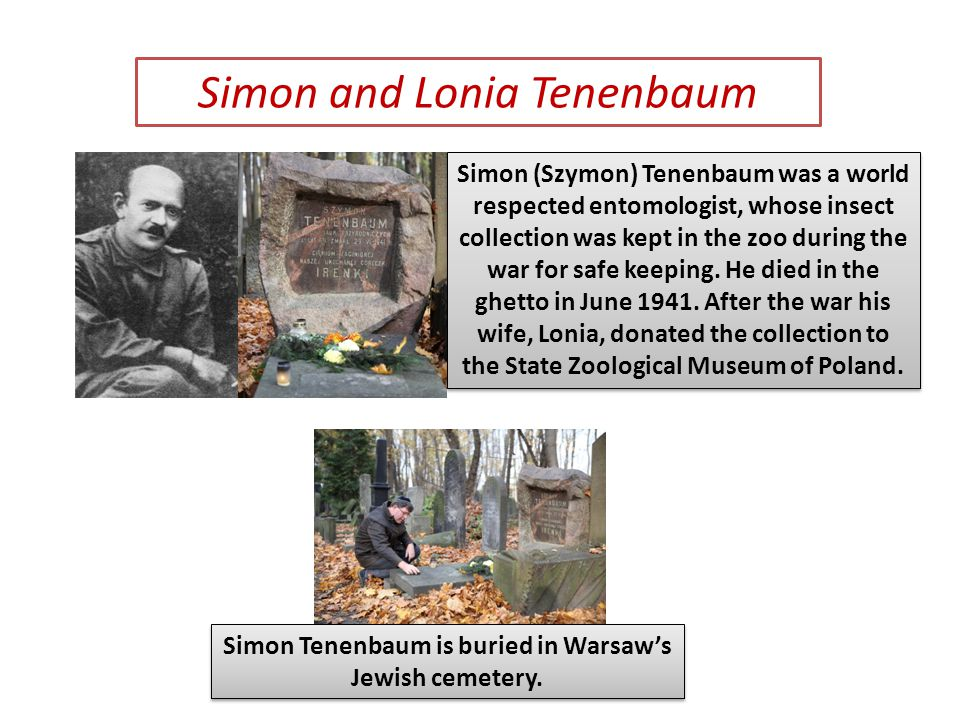 Simon (Szymon) Tenenbaum was a world respected entomologist, whose insect collection was kept in the zoo during the war for safe keeping.