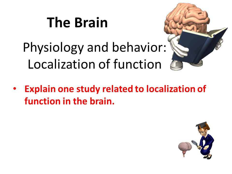 Physiology and behavior: Localization of function Explain one study related to localization of function in the brain.