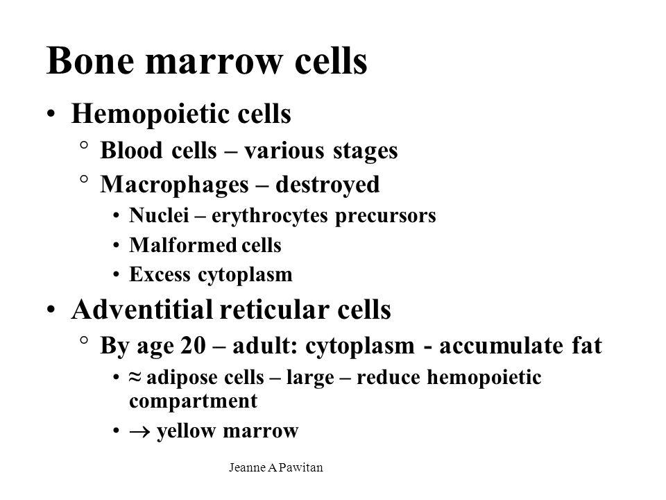 Jeanne A Pawitan Diffuse lymphoid system Non-encapsulated Location: °Lymphoid organs °Mucosa (lamina propria) – mucosa associated lymphoid tissue (MALT) Digestive system (Gut ALT): Peyer's patches Respiratory system (Bronchus ALT) Urinary system Occur as °Diffuse lymphoid tissue = localized lymphocyte infiltration °Lymphoid nodules (lymphonodulus)