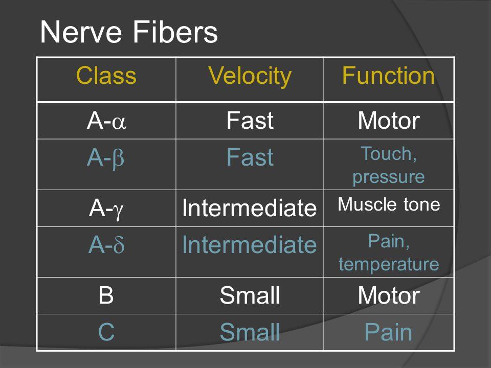 Nerve Fibers ClassVelocityFunction A-  FastMotor A-  Fast Touch, pressure A-  Intermediate Muscle tone A-  Intermediate Pain, temperature BSmallMo