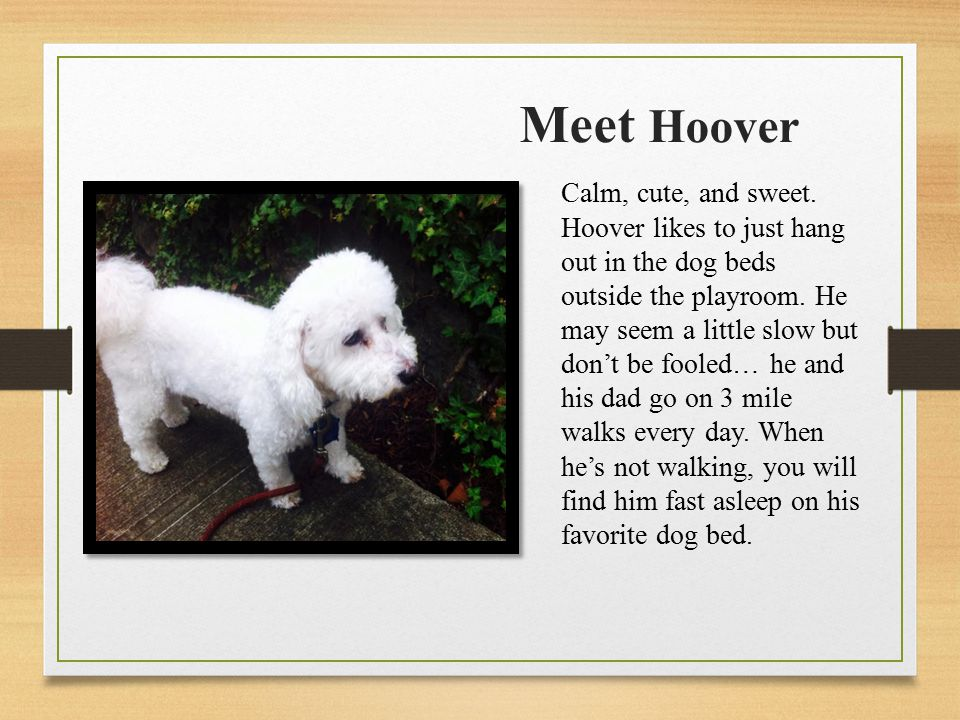 Meet Hoover Calm, cute, and sweet.