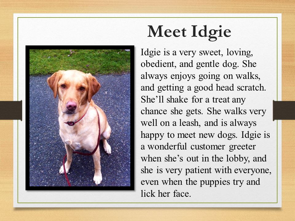 Meet Idgie Idgie is a very sweet, loving, obedient, and gentle dog.