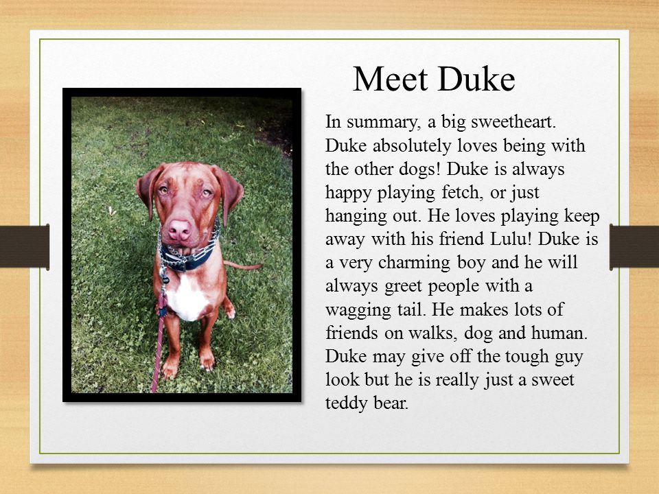 Meet Duke In summary, a big sweetheart. Duke absolutely loves being with the other dogs.