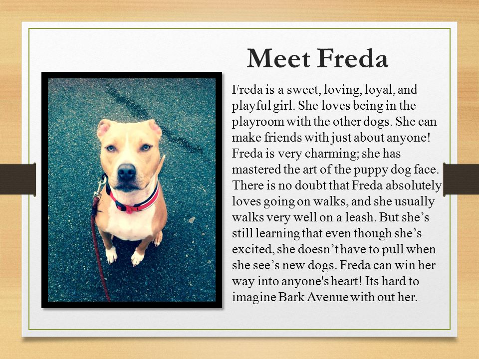 Meet Freda Freda is a sweet, loving, loyal, and playful girl.