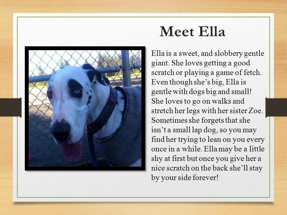 Meet Ella Ella is a sweet, and slobbery gentle giant.