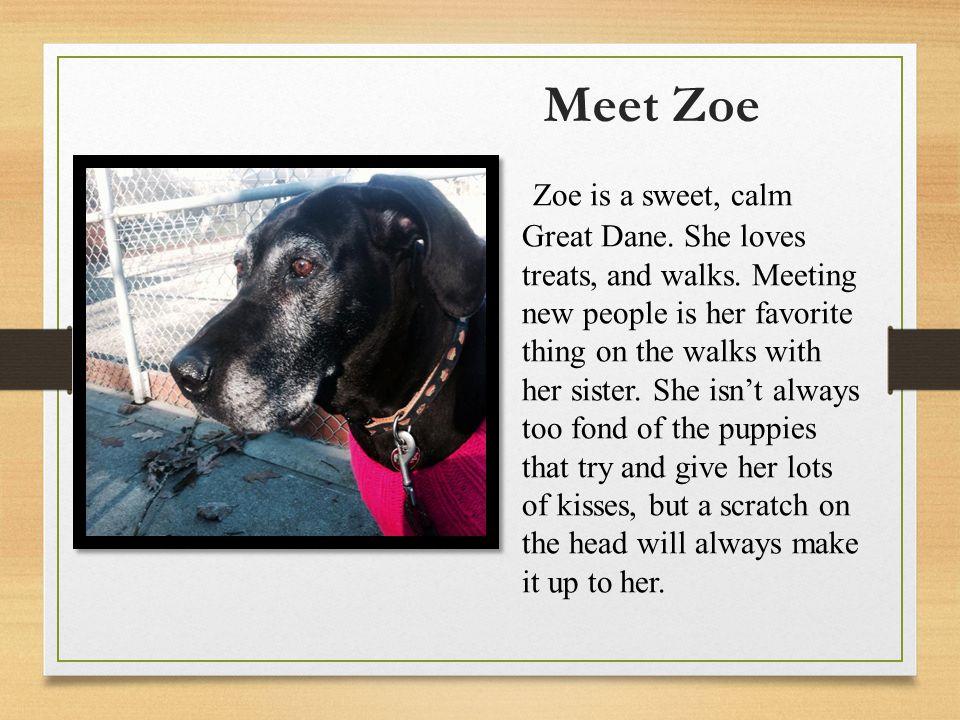 Meet Zoe Zoe is a sweet, calm Great Dane. She loves treats, and walks.
