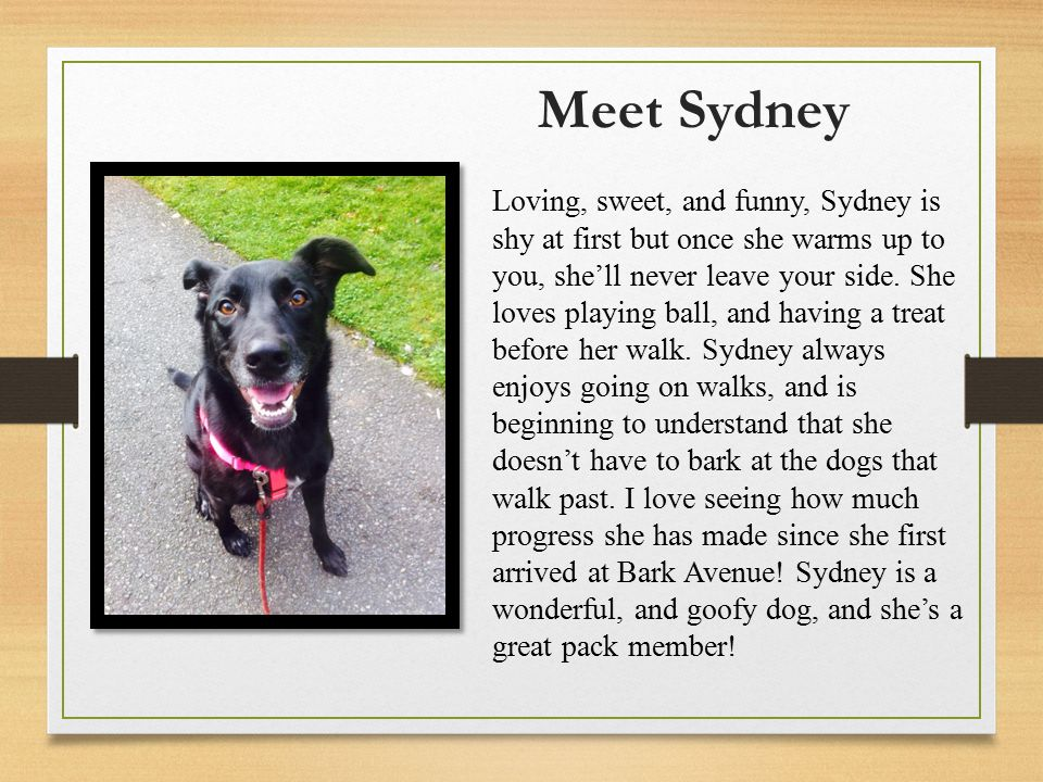 Meet Sydney Loving, sweet, and funny, Sydney is shy at first but once she warms up to you, she'll never leave your side.