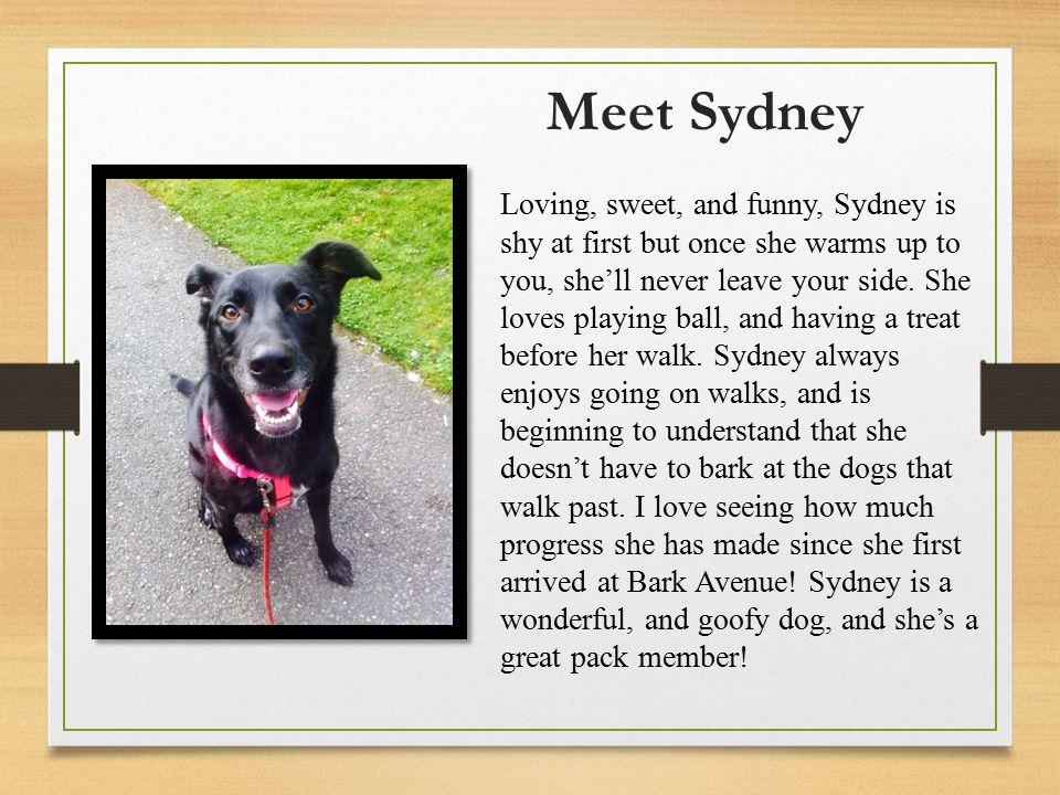 Meet Spirit Loving, cute, and sweet.Spirit is a very people oriented dog.