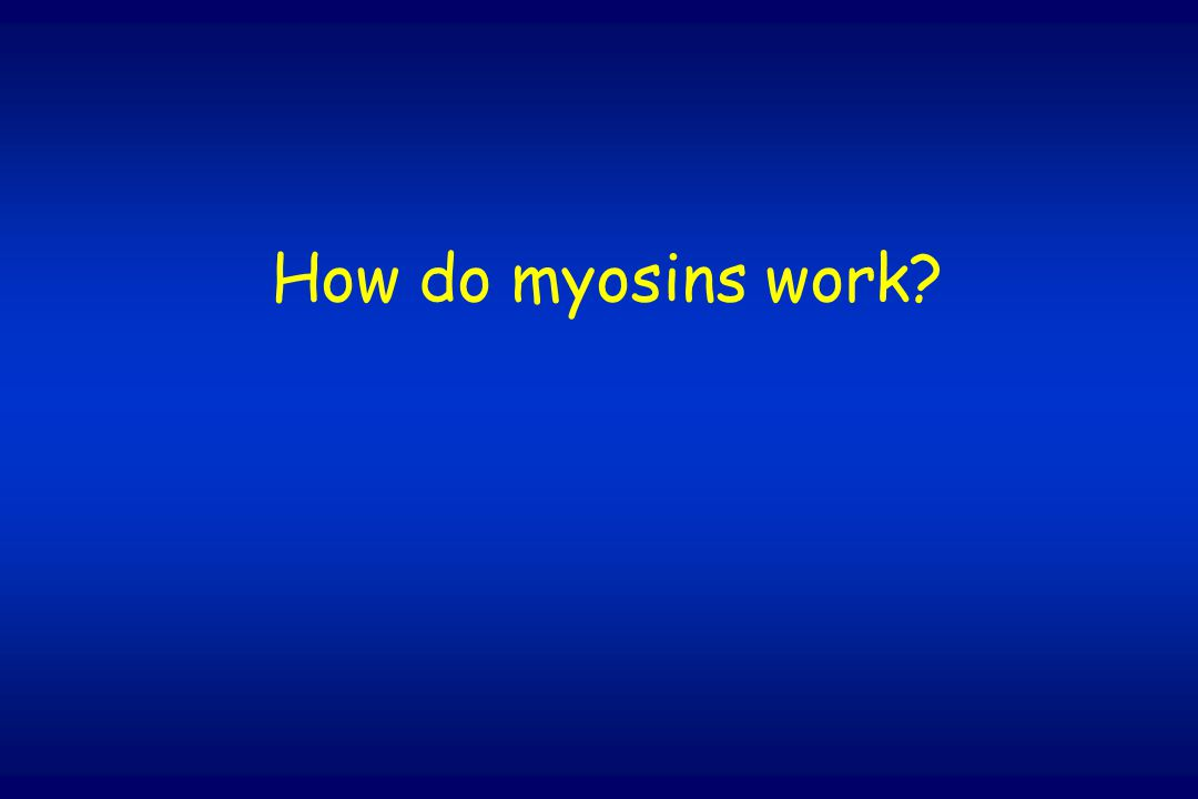 How do myosins work?
