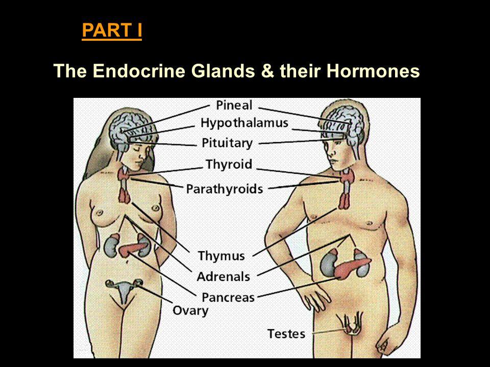 The Endocrine Glands & their Hormones PART I
