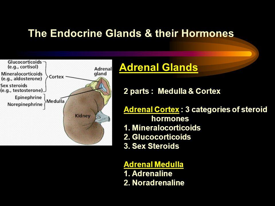The Endocrine Glands & their Hormones Adrenal Glands 2 parts : Medulla & Cortex Adrenal Cortex : 3 categories of steroid hormones 1. Mineralocorticoid