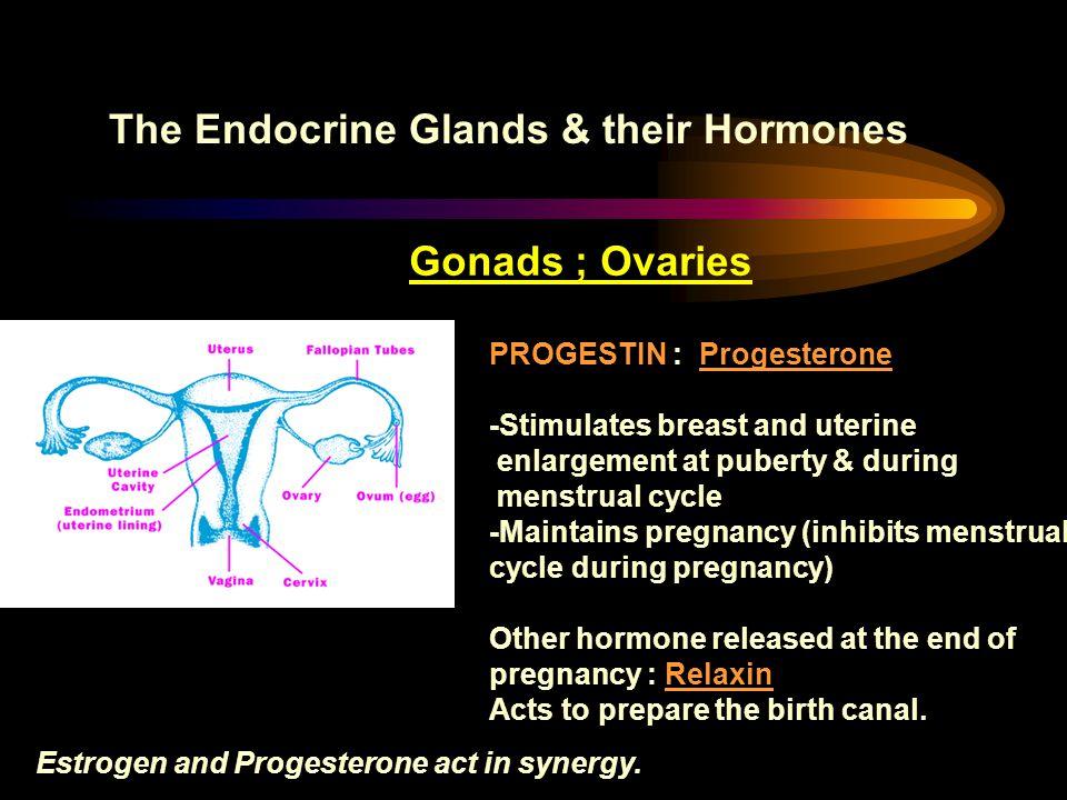 The Endocrine Glands & their Hormones Gonads ; Ovaries PROGESTIN : Progesterone -Stimulates breast and uterine enlargement at puberty & during menstru