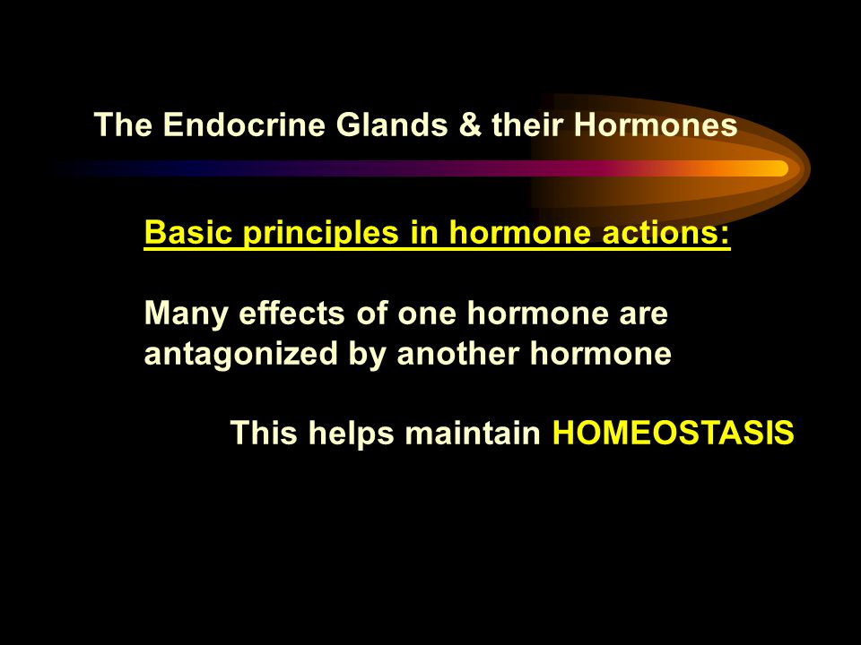 The Endocrine Glands & their Hormones Basic principles in hormone actions: Many effects of one hormone are antagonized by another hormone This helps m