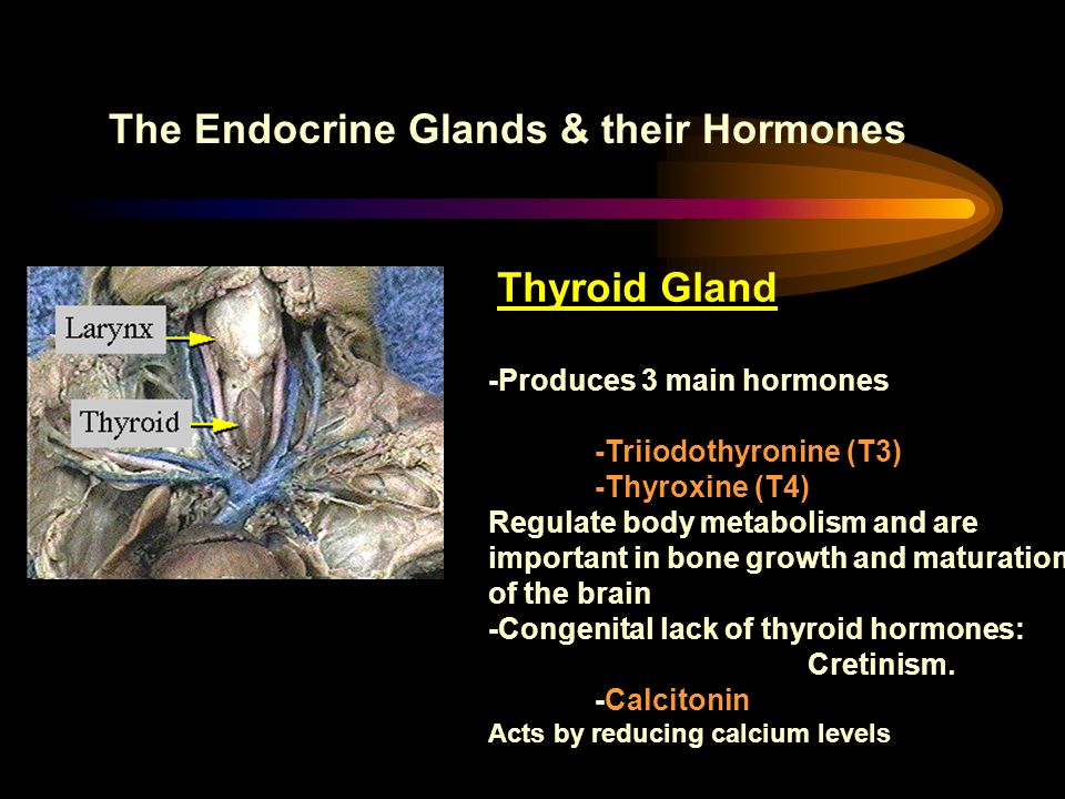 The Pituitary Gland & its Hormone Median eminence 1.