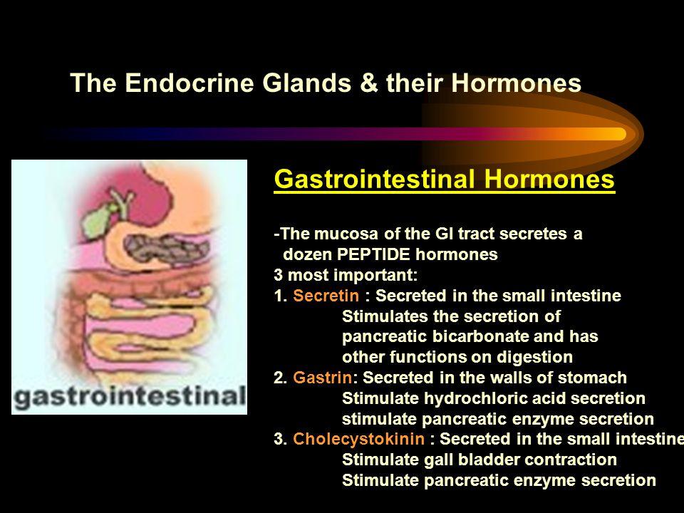 The Endocrine Glands & their Hormones Gastrointestinal Hormones -The mucosa of the GI tract secretes a dozen PEPTIDE hormones 3 most important: 1. Sec